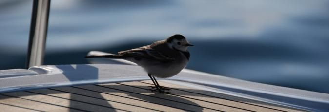 Bird perched on Greek Sails sailing yacht during a flotilla sailing holiday