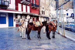 Motor traffic is banned from the island of Hydra and so horses & ponies provide the public transport
